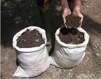 membuat kompos dengan karung